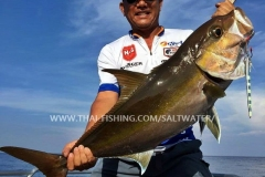 Amberjack Fiskeri Similan Islands Thailand