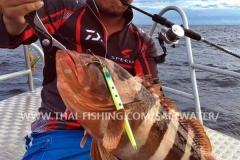 Blacktip Grouper Fiskeri Similan Islands Thailand