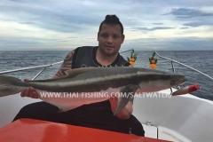 Cobia Fiskeri Khao-Lak