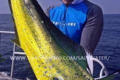 Dorado Fiskeri Similan Islands Thailand