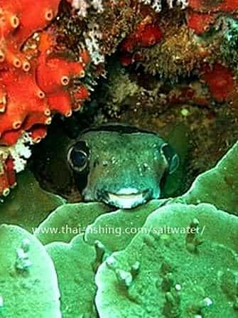 diving khao lak