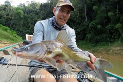 Asian River Catfish - Jungle Fly Fishing Thailand