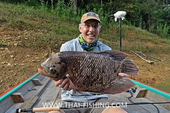 Giant Gourami Fly Fishing In The Jungle Of Thailand