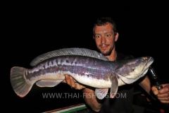 Giant Snakehead Fishing - Jungle Lake Fishing Thailand