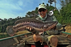 Giant Snakehead Fly-Fishing - Jungle Lake Fly Fishing Thailand