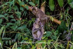 Jungle Lake Fishing Thailand - Macaque Monkey