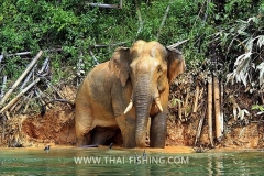 Jungle Lake Fishing Thailand - Wild-Elephant
