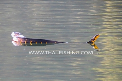 Mangrove Cat Snake - Jungle Lake Fishing Thailand
