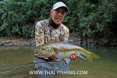 Big Blue Mahseer - Jungle Fly Fishing Thailand