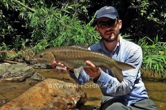 Blue Mahseer Dry Fly Fishing Thailand