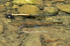 Fly Fishing in Thailand For Mahseer