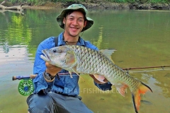 Hampala Barb Fly Fishing Thailand
