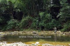 Jungle Mahseer Fly Fishing Thailand