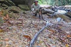 Big Photon Snake - Jungle River Fishing Thailand