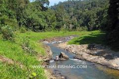 Jungle River Fishing South Thailand