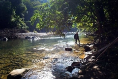 Jungle River Mahseer Fly Fishing South Thailand