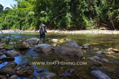 Jungle Rivers Fly Fishing South Thailand