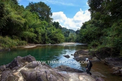 Jungle Rivers Fly Fishing in Thailand