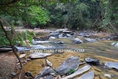 Jungle river Fishing Thailand