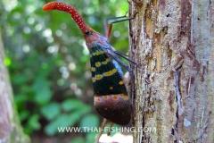 Lantern fly Lanthornbug Fulgoridae - Jungle Thailand