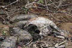 Photon Snake - Jungle South Thailand