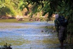 Wild Boar - Jungle Rivers Thailand