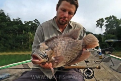 Giant-Gourami-Fluefiskeri-Thailand-Jungle-Sø-Fiskeri
