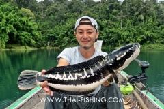 Giant-Snakehead-Fiskeri-Thailand-5