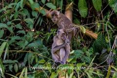 Jungle-Sø-Fiskeri-Thailand-Macaque-Monkey