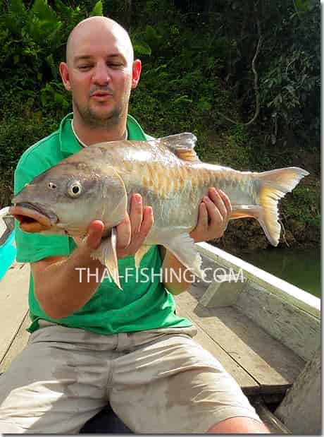 Fiske Mahseer Thailand Report
