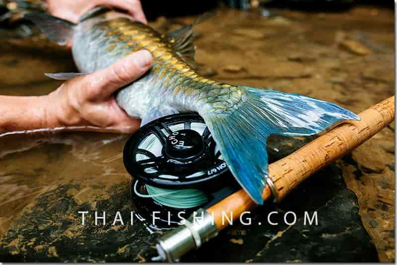 Fly fishing collaborative Thailand