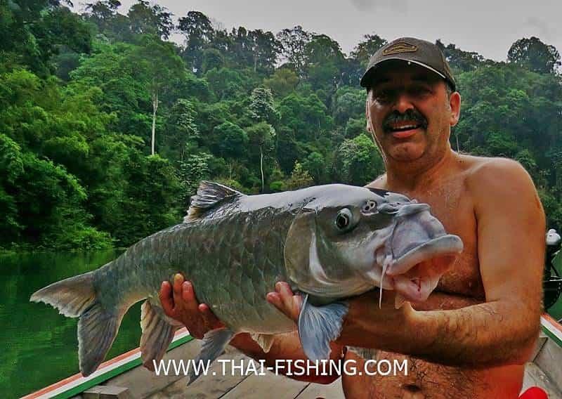 Big Thai Mahseer from south Thai jungle rivers