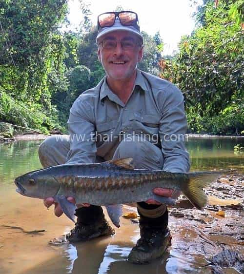 Blue Mahseer Fluefiskeri i Thai Jungle-floder Fiske Report 9