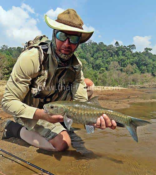 Blue Mahseer Fly Fishing in Thailand - Fishing Report 9