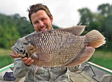 Fish Species Thailand Giant Gourami