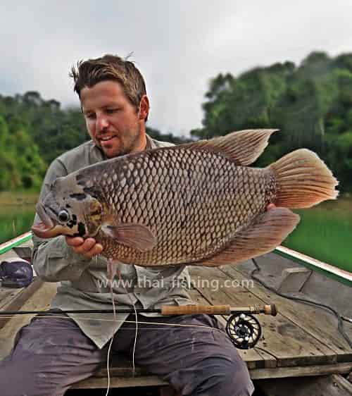 Giant Gourami Fly Fishing Thailand - Fishing Report 9